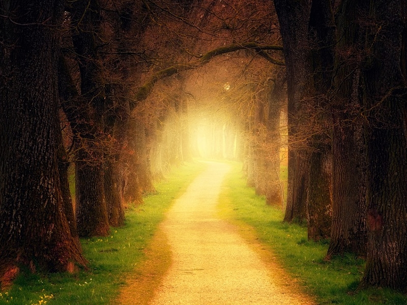 light on a path through the woods